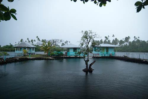 Green Sea Turtle Pond