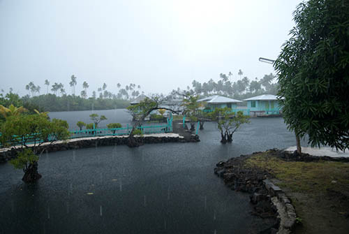 Green Sea Turtle Pond Rain