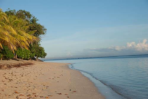 Bach Samoa